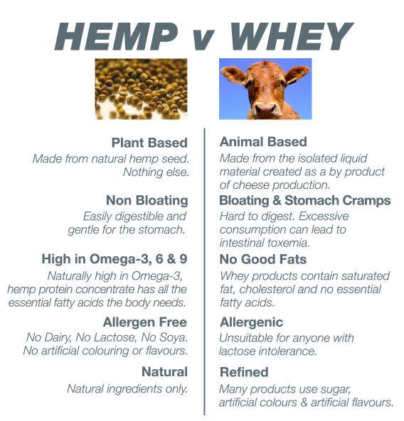 whey vs plant based protein